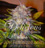 Delicious Caramelo Female 5 Marijuana Seeds